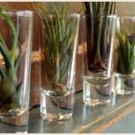 エアプランツのオシャレなインテリアの飾り方や育て方と風水