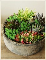 多肉植物を素敵に飾る寄せ植えのコツは?アレンジでお洒落に可愛く♪