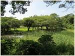 春夏のバードウォッチングで野鳥が観察できる東京都内のスポットと種類
