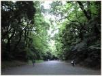 関東の美しい森の名所10選|森林浴のおすすめスポット徹底紹介