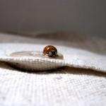 衣類の虫除けはハーブで 重曹で作る天然防虫剤アロマサシェの作り方