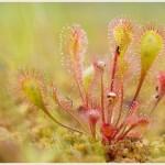 虫も人も虜になる食虫植物の魅力と捕食の種類|何故虫を食べるの?
