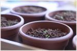 ベランダ菜園オーガニックハーブの用土とは?手作り培養土の配合と作り方