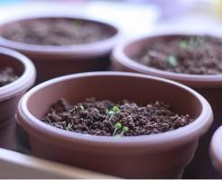 ベランダ菜園 土