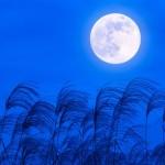 お月見2018年の十五夜はいつ?満月になる?中秋の名月の意味や由来