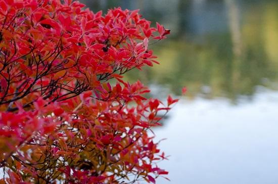 奥利根湖 紅葉