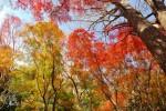 鎌倉の紅葉の美しい寺3選!2017年の時期や見頃は?ライトアップも