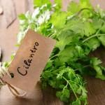 美肌と健康を作るパクチーの栄養価が凄い!効能と美容効果を徹底紹介
