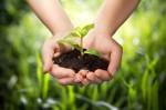 自然農法でコンパニオンプランツが効果的な理由と植え方の注意点