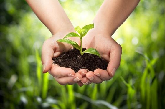 自然農法,コンパニオンプランツ