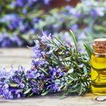 アロマセラピーのケモタイプ精油とは?ローズマリー3種類の使い方や特徴