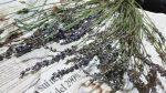 ラベンダーの収穫と増やし方!失敗しない剪定や挿し木の方法と時期は?