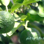 柚子風呂の作り方と効果効能|肌がピリピリしない入り方や対処方法