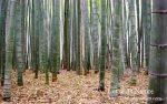 竹繊維の強度や特徴|バンブーリネンとバンブーレーヨンは製造方法の違い?