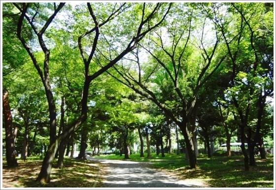 関東 美しい森