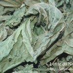 桑の葉茶の効能と副作用|糖尿病に効果的な飲み方は?作り方や入れ方も!