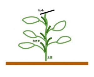 枝豆 育て方