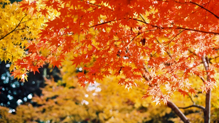 奈良の紅葉,名勝依水園